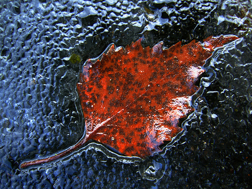 A leaf is preserved in the ice.